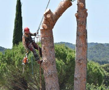 Les différentes manœuvres d'abattage d'arbre