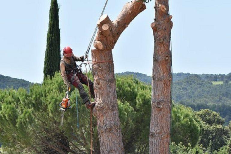Abattage d'arbre : les différentes manœuvres à maîtriser